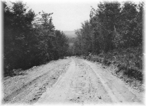 A Truck Trail built by the CCC's on a Reforestation Area in Allegany County