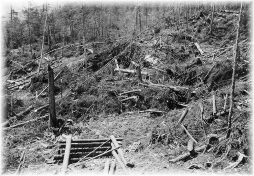 Slash that remained after a logging operation.